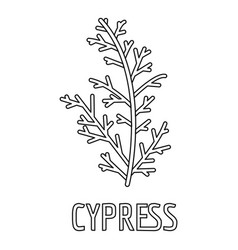 Cypress leaf icon outline style vector