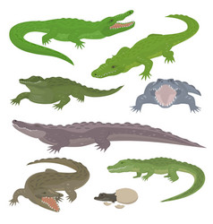 green crocodile and alligator reptile wild animals vector image