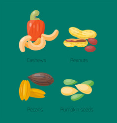 piles of different nuts peanut cashew nutrition vector image