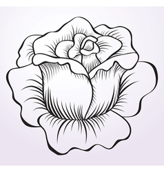 rose drawing vector image vector image