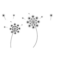 flying dandelion vector image