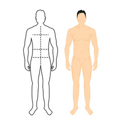 Man anatomy silhouette size human body full vector