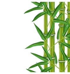 Seamless border with bamboo plants and leaves vector