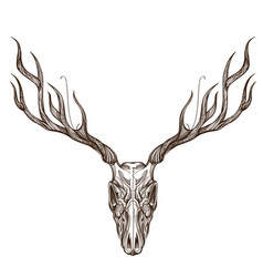 Sketch of deer skull outline for tattoo printing vector