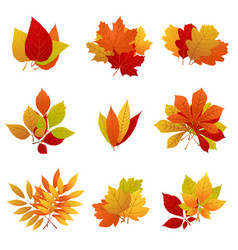 autumn leaves yellow foliage set vector image