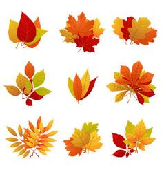 autumn leaves yellow foliage set vector image