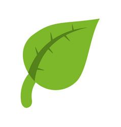 Green plant icon image vector