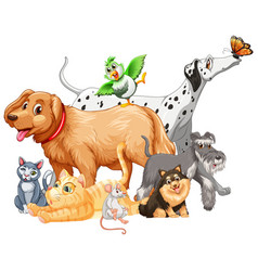 group pet on white background vector image