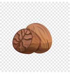 nutmeg icon cartoon style vector image