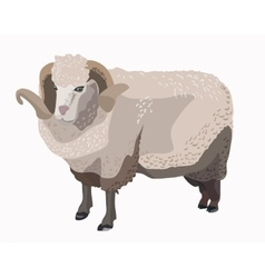 Ram sheep isolated vector