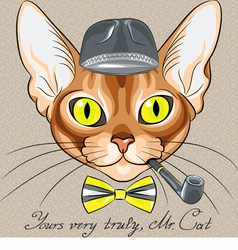 Cartoon hipster cat Abyssinian vector