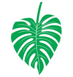 leaf of monstera - tropical plant vector image