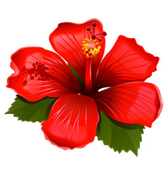 red hibiscus icon vector image