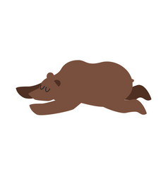 Sleeping bear wild animal sleeps sleepy grizzly vector