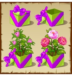 Gift box with growing pink peony vector image