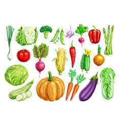 vegetable watercolor set for healthy food design vector image vector image