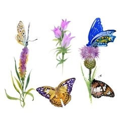 watercolor wild flowers and butterflies set vector image