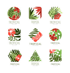 collection of geometric tropical logo with leaves vector image vector image