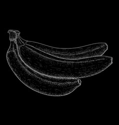 Bananas white hand drawn sketch on black vector