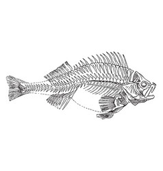 Fish skeleton vintage vector