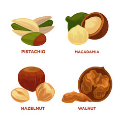 Nut set ripe nuts and seeds vector