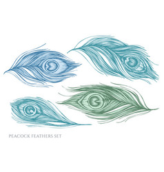 Set hand drawn pastel peacock feathers vector