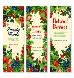 fresh berries and fruits banners set vector image vector image