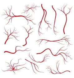 Human eye veins vessel blood arteries isolated vector