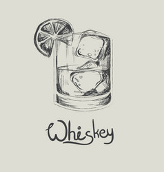 Hand drawn whiskey in glass with ice isolated vector