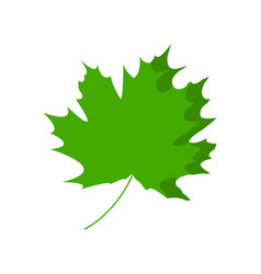 Maple leaf is isolated on a transparent vector