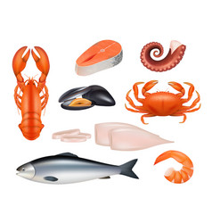 Seafood tuna meal fishes shrimps molluscs octopus vector