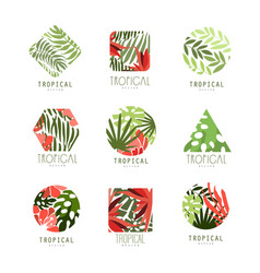 Set of geometric tropical logo with leaves and vector
