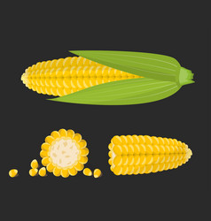 set sweet golden corn cobs and grains isolated vector image