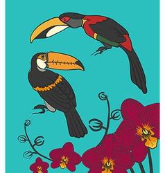 Toucan background vector