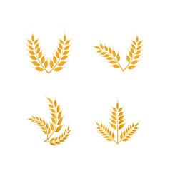 Wheat yellow logo icon template vector