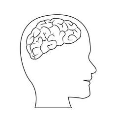 Human head with brain part organ anatomy vector