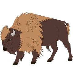 American buffalo or bull vector