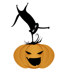 black cat on a halloween pumpkin isolated vector image