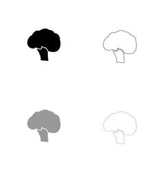 broccoli black and grey set icon vector image