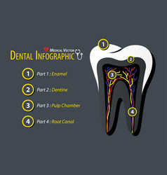 Dental infographic flat design vector