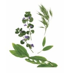 Dry herbarium plants flowers and leaves vector