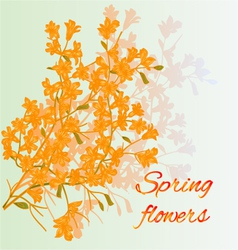Forsythia spring flowers spring background vector