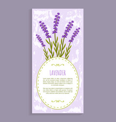 lavender herbs collection vector image