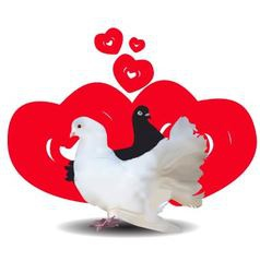 Love and pigeons vector