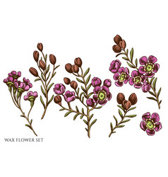Set hand drawn colored wax flower vector
