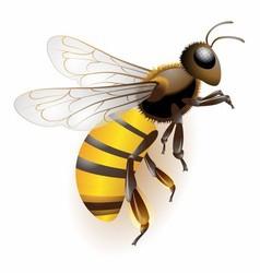 3d bee stock icon bee logo vector image