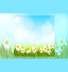 spring background with daffodil narcissus flowers vector image