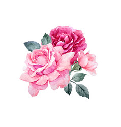 watercolor roses composition vector image