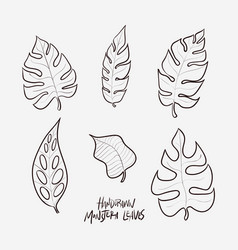 6 hand drawn monstera leaves in lineart style vector