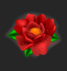 beautiful flower red peony vector image